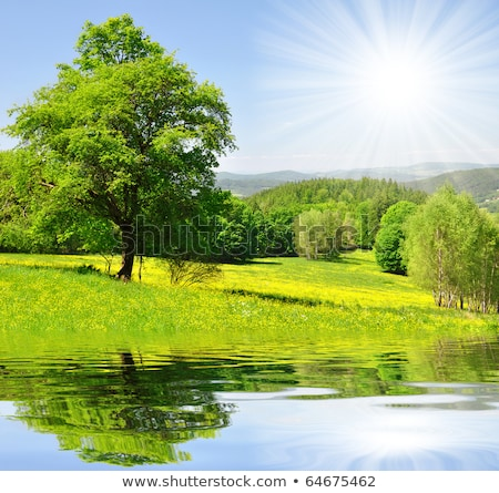 Stock fotó: Summer Landscape With A Lake In The Woods