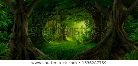 Stock photo: Trees and river in the forest