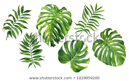 watercolor tropical leaves isolated stock photo © Mamziolzi
