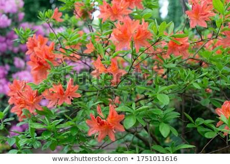 Friss virágok természet nyár új virág Stock fotó © craig
