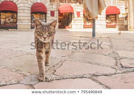 市 猫 黒 路地 座って 広場 ストックフォト © bryndin