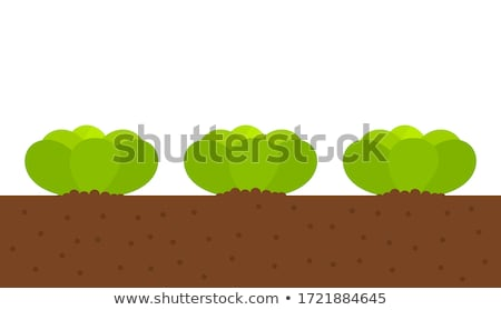 салата почвы зеленый листьев растущий здоровья Сток-фото © ssuaphoto
