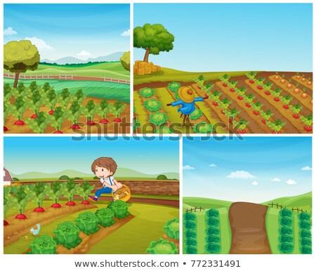4 ファーム 野菜 かかし 実例 風景 ストックフォト © colematt