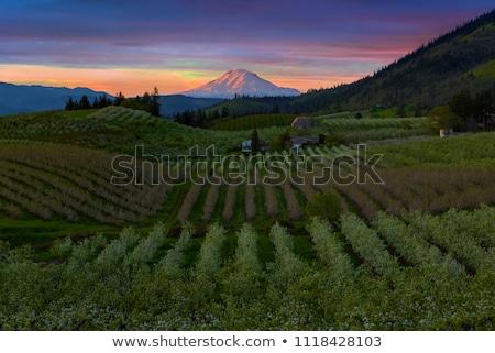 Mount Adams at Hood River Oregon during Sunset Stock photo © davidgn
