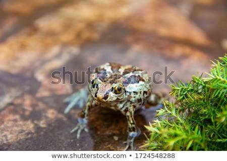 Gölet hayvanlar örnek ahşap yeşil yaprakları Stok fotoğraf © colematt