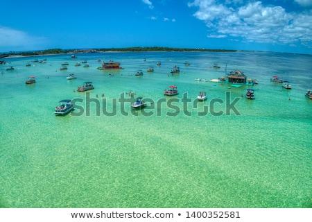 Blu granchio isola illustrazione mare sfondo Foto d'archivio © bluering