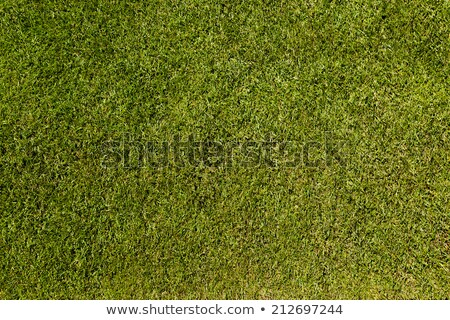 Perfect lawn with green grass view from above Stock photo © galitskaya