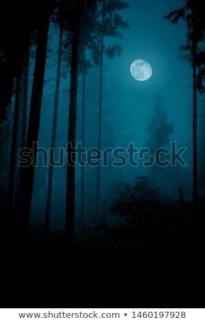 сцена лесу ночь иллюстрация трава Сток-фото © colematt