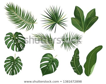 Quadro de imagem palms folhas isolado gradiente Foto stock © cammep