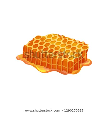 Color Honeycomb Piece With Fresh Organic Honey Vector Stock photo © pikepicture