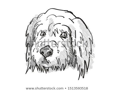 Cartoon ретро рисунок стиль голову Сток-фото © patrimonio