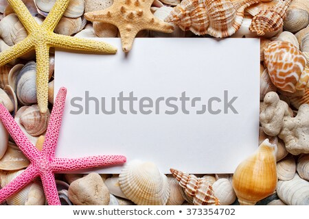 Sea Shell background with space for text. Message from beach Stock photo © galitskaya