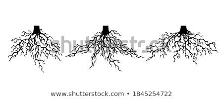 Toplama güçlü bitki kökleri siluet soyut Stok fotoğraf © designer_things