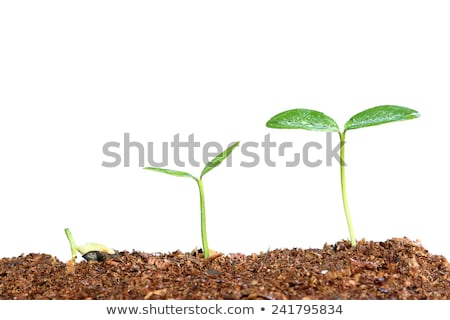 新しい 生まれる 緑色の葉 値下がり 水滴 水 ストックフォト © Ansonstock