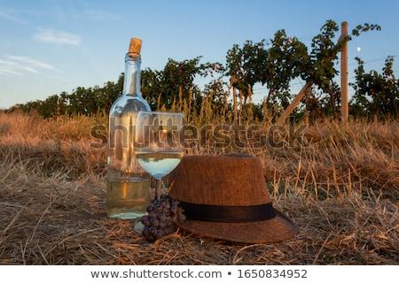 vinha · República · Checa · natureza · folhas · frutas · uvas - foto stock © phbcz