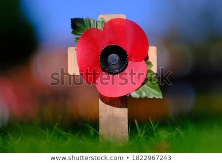 Maku odwołać się kwiat wojny śmierci czerwony Zdjęcia stock © leeser