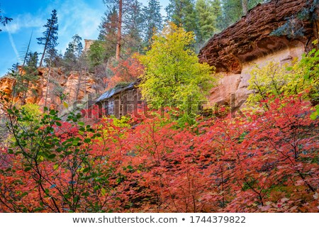 Fall colors along Oak Creek forested canyon near Sedona. Stock photo © Klodien
