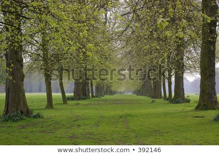 дерево - Сток-фото © lianem