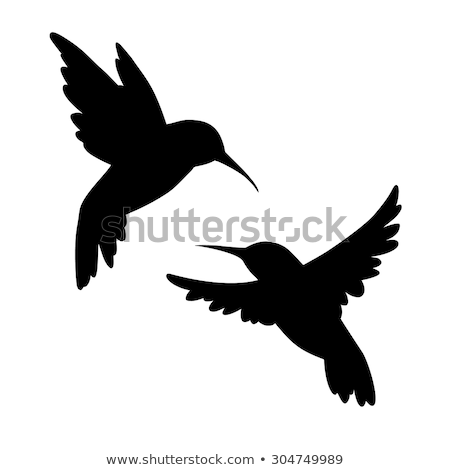 silhouette of hummingbird Stock photo © perysty