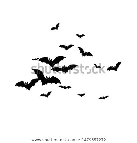 Halloween bat kelime bulutu aile örümcek korku Stok fotoğraf © Refugeek