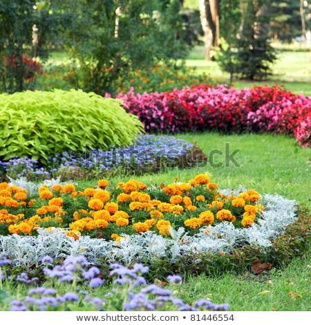 Renkli yaz şehir park doğa Stok fotoğraf © frank11