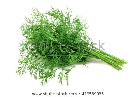 Fresh Dill Stock photo © luminastock