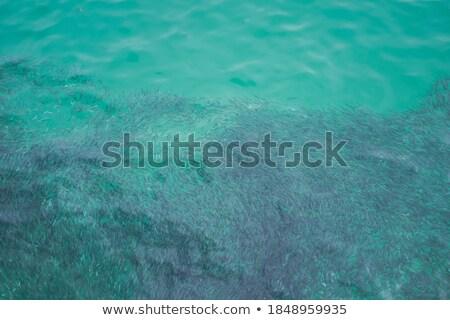 тропические рыбы синий воды живая природа сцена океана Сток-фото © jrstock