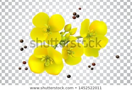 dziedzinie · świeże · kwiaty · Błękitne · niebo · piękna · żółte · kwiaty - zdjęcia stock © thomaseder