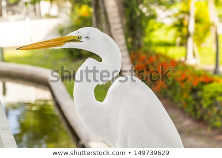 Stock photo:  white heron walking on the balustrade of the veranda