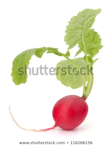 small garden radish with leaves stock photo © natika