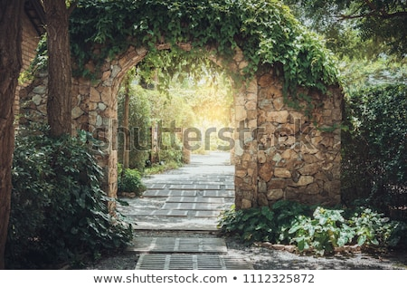 roślinność · mur · starych · miasta · niebo · tekstury - zdjęcia stock © lameeks