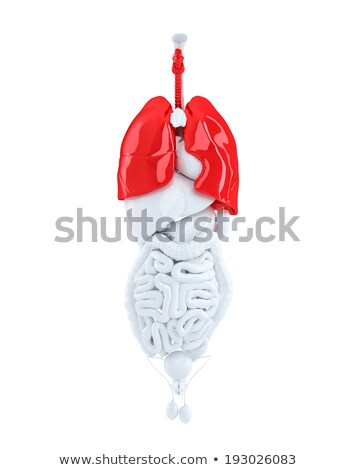 Isolated human organs focused on lungs. 3d illustration. Contains clipping path Stock photo © Kirill_M
