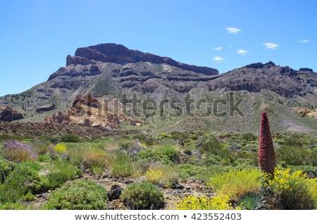 park · vulkáni · kövek · kék · ég · Kanári-szigetek · égbolt - stock fotó © rabel