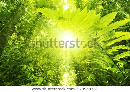 Podświetlany Paproć W Lesie Zdjęcia stock © szefei
