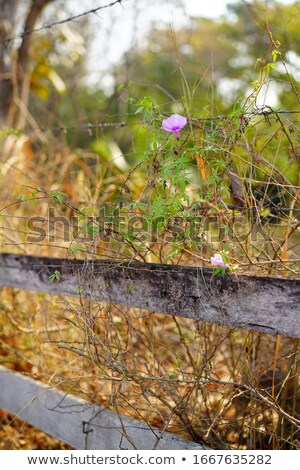 зеленая трава подсветка весны трава саду лет Сток-фото © entazist