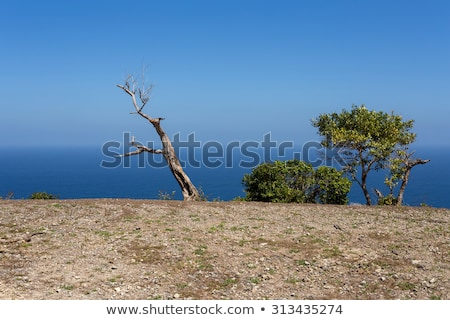 dead tree at bali manta point diving place at nusa penida island stock photo © artush