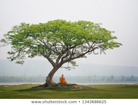 Persoon mediteren boom man zon sport Stockfoto © shawlinmohd