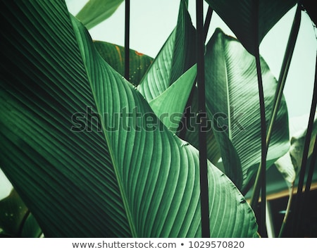 a plant with green leaves stock photo © bluering