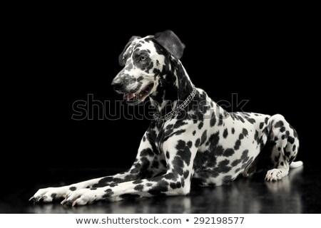 Cute czarny Fotografia studio ciemne oglądać Zdjęcia stock © vauvau