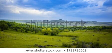 Сток-фото: дерево · области · Blue · Sky · облака · одиноко · небе