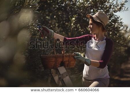 Nő fonott kosár olajbogyók farm fiatal nő Stock fotó © wavebreak_media