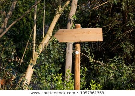 Blank Wooden Signs in a Sunlit Park Stock photo © Frankljr