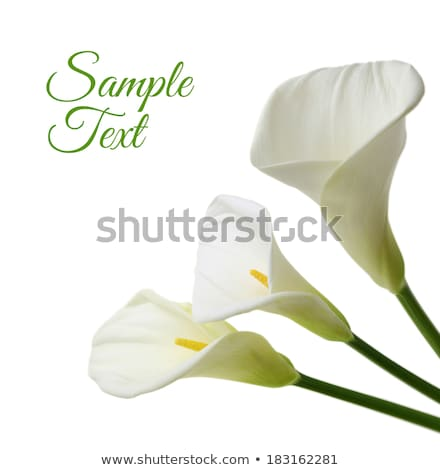 Mooie vrouw witte lelies portret shot natuurlijke Stockfoto © LightFieldStudios