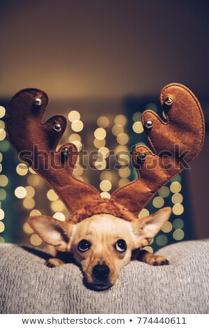reindeer little puppy looks up Stock photo © feedough