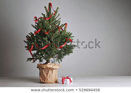 Yeşil küçük Noel çam yalıtılmış Stok fotoğraf © orensila