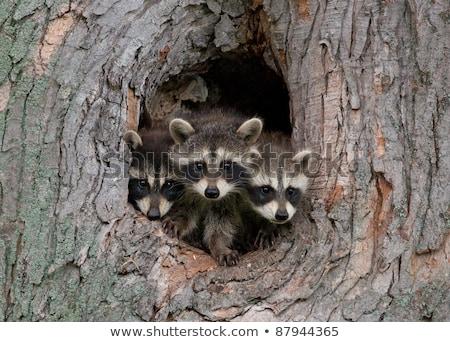 Aile örnek sevmek komik hayvan orman Stok fotoğraf © adrenalina
