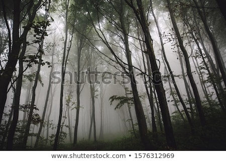 najaar · mistig · ochtend · berg · heuvel · plateau - stockfoto © wildman
