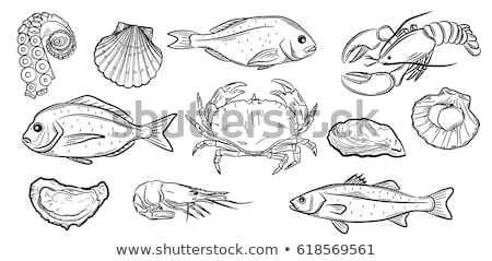 hand drawn decorative sea bass and crab icons stock photo © robuart