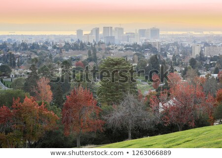 Sunset views of Oakland Downtown and San Francisco Bay from a hilltop in Mountain View Cemetery Stock photo © yhelfman