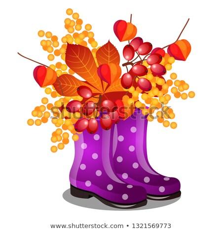 резиновые · Purple · сапогах · высушите · изолированный - Сток-фото © Lady-Luck